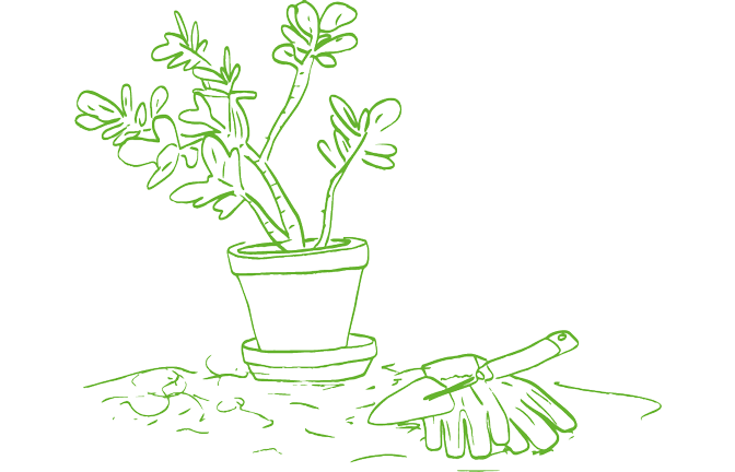 An illustration of a potted plant
